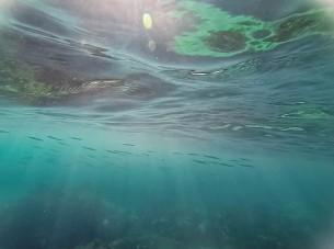 Underwater Gordon's Bay
