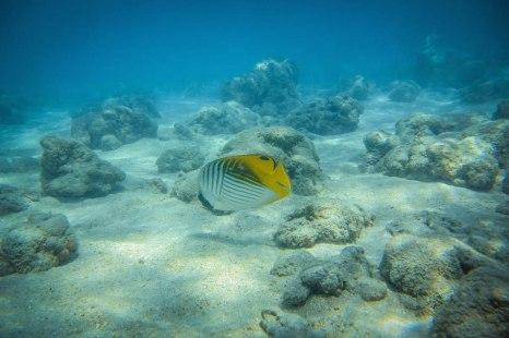 The local marine life