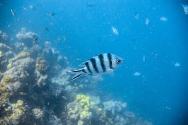 Playful fish