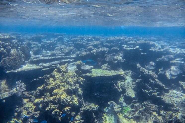 Healthy coral in Ningaloo Reef
